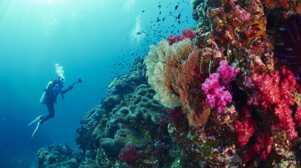Diving in Phuket and the Similan Islands