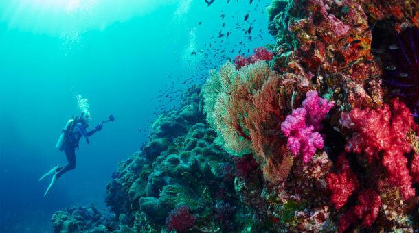 Phuket Dive Tours - Sunrise Divers Phuket