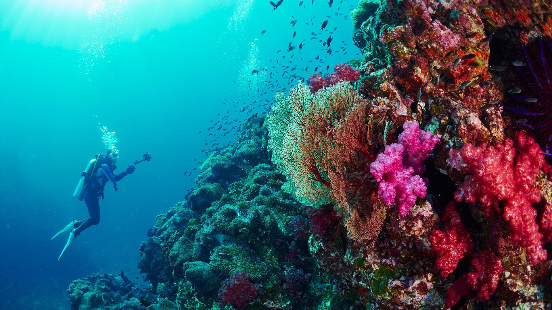 Similan islands dive sites the best diving in thailand - Dive dive dive ...