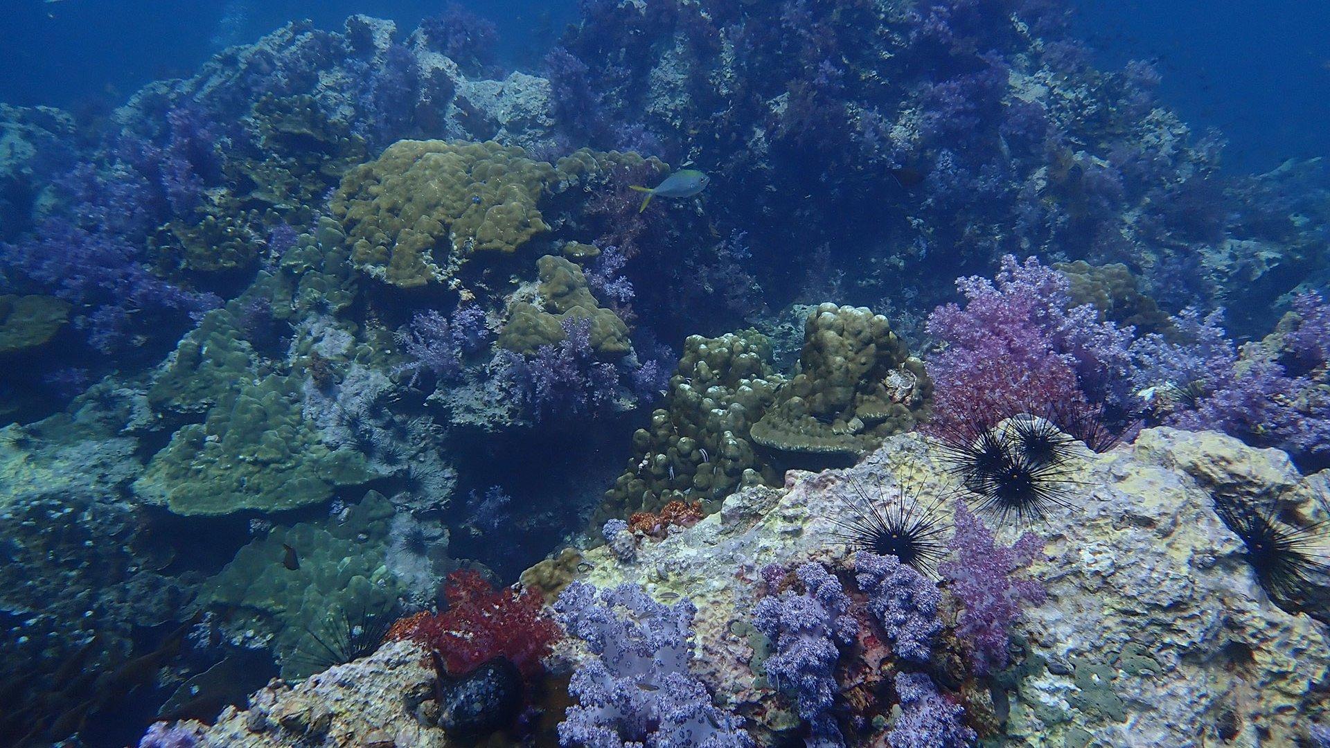 King Cruiser Wreck & Shark Point Speedboat Dive Charter from Phuket