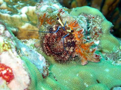 Hermit Crab - Phuket Liveaboard Thailand