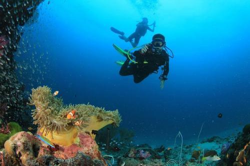 Divers at the Similan Islands